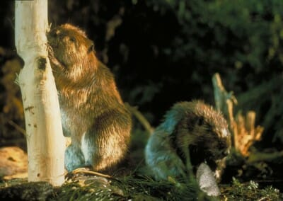 Bark removal and grooming